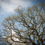 wpid-TreesMay_05__2013.jpg